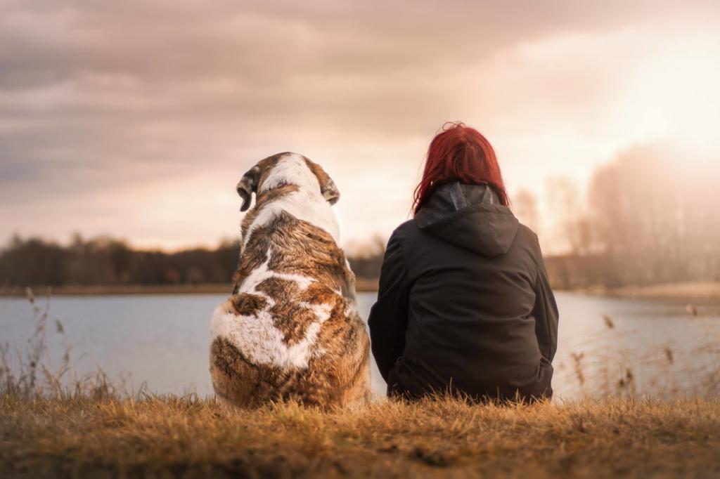 Hunde für Anfänger