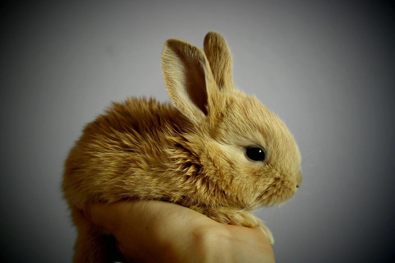 kaninchen sind pflegeleicht