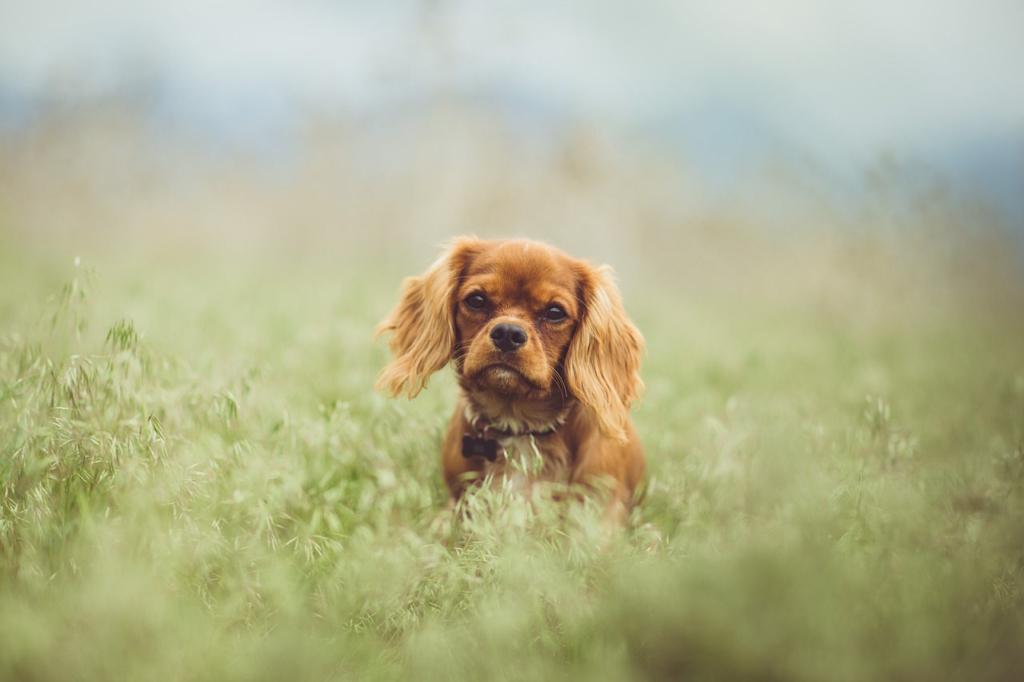 geeignete hunderassen für berufstätige