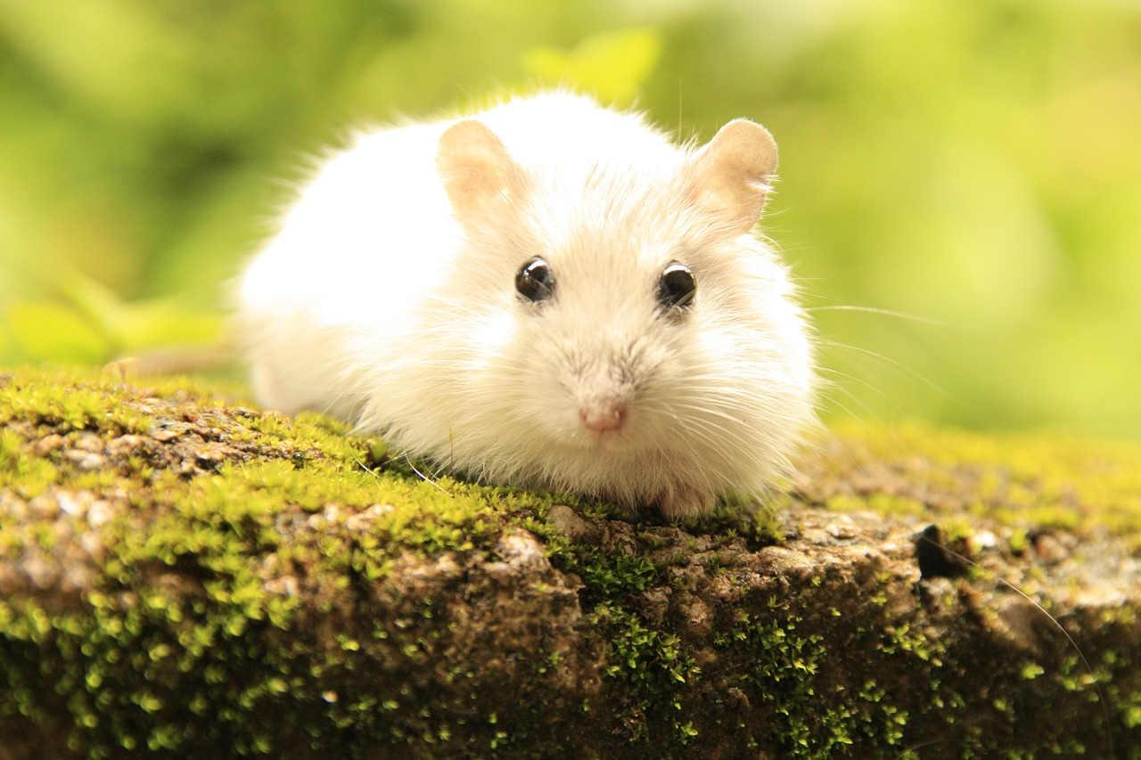 hamster sind kleine haustiere