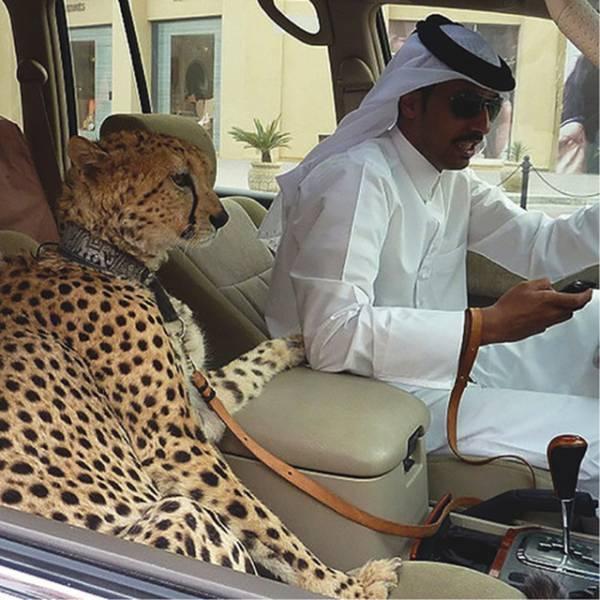 leopard als haustier