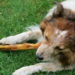 Ernährung – Was fressen Hunde