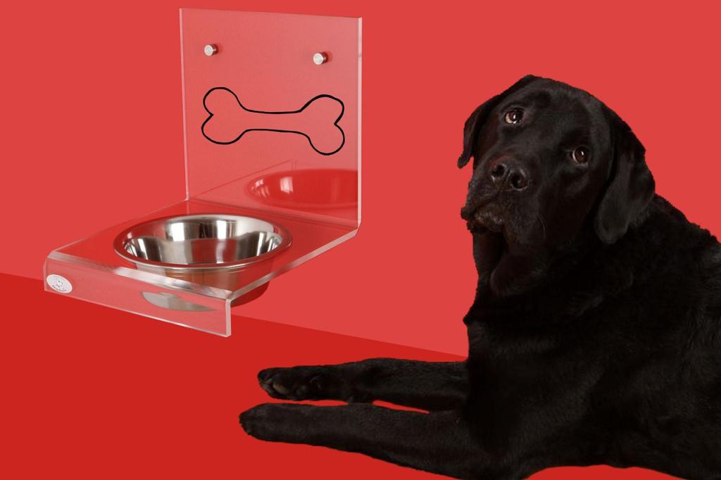 was dürfen Hunde nicht fressen
