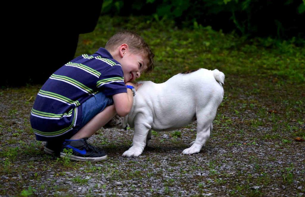 Welches Haustier Fur 10 Jahriges Kind