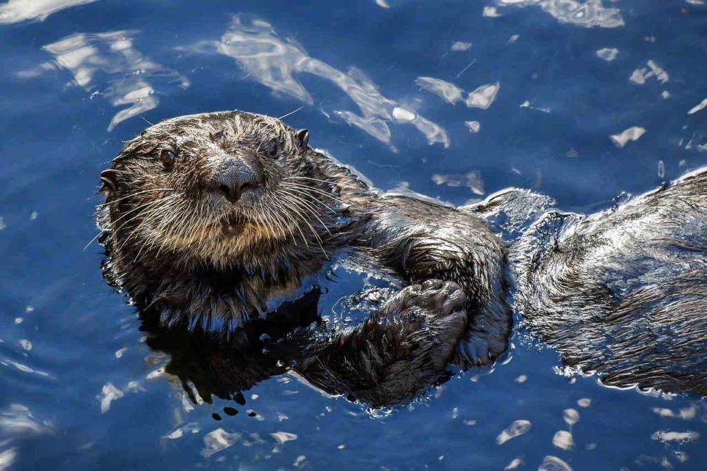 Otter als Haustier in Deutschland