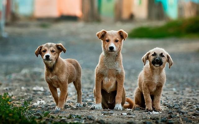 laute Darmgeräusche beim Hund