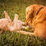 Gesundheit für den Hund