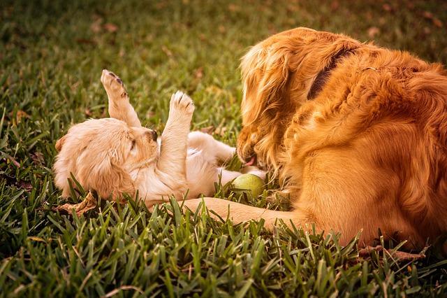 Hund harter Bauch