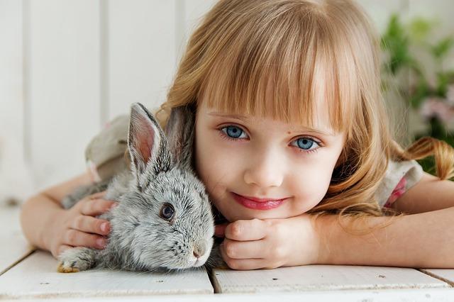 kaninchen artgerecht halten