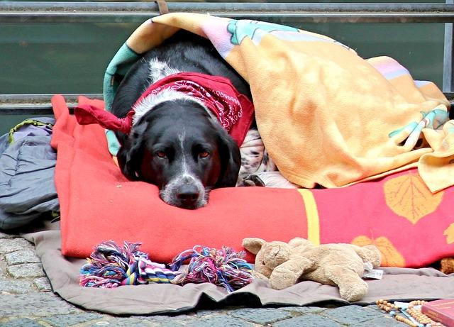 Hausmitter für Hundeschnupfen